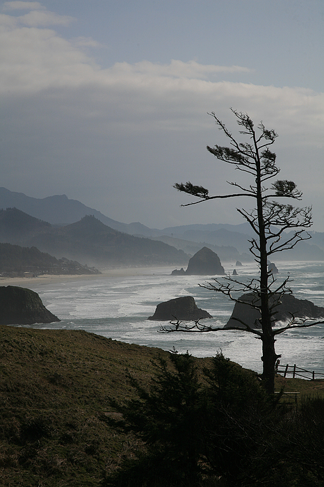 Cannon Beach by Timothy Johnson